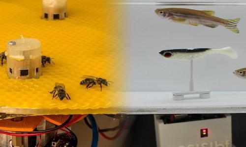 Bees and fish.